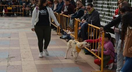 Los animales abandonados en l'Horta Sud ya no serán sacrificados