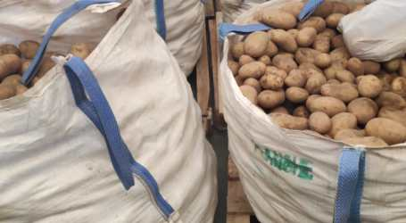 Un llaurador de Meliana dona 8.000 kg de creïlles per a sectors vulnerables del poble