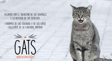 Gats La Canyada presenta alegaciones a la nueva propuesta de Ordenanza Municipal Animal
