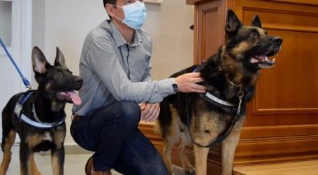 Boss y Ares, los nuevos perros policía que forman parte de la Unidad Canina de la Policía Local de Burjassot