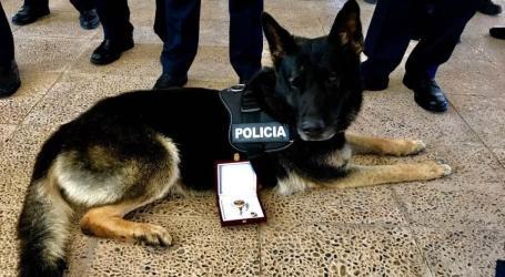 Mor Bingo, el primer ca que va tenir la Unitat Canina d'Alaquàs