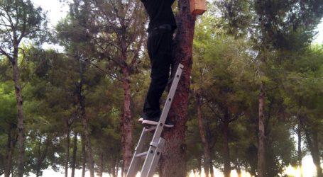 Paiporta instal·la nius per a aus insectívores per lluitar contra les plagues d'insectes d'una manera sostenible