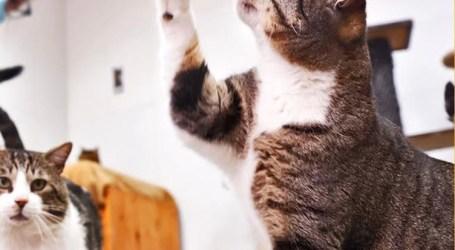 Paterna promueve la protección de colonias felinas controladas