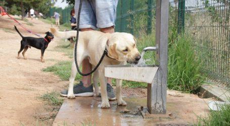 Paterna aprueba la nueva Ordenanza de Bienestar Animal que permitirá implantar el servicio de ADN canino en la ciudad