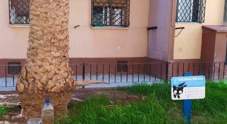 Las Colonias Felinas de Alboraya llevaron a cabo la esterilización de 67 felinos durante el año pasado