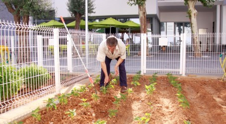 Torrent pone a disposición de los mayores de 65 años un huerto urbano