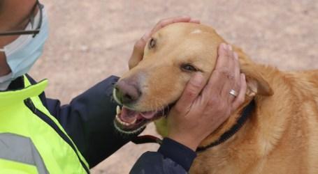 El Refugio Municipal de Animales de Paterna consigue hogar para 74 animales desde la puesta en marcha de su web
