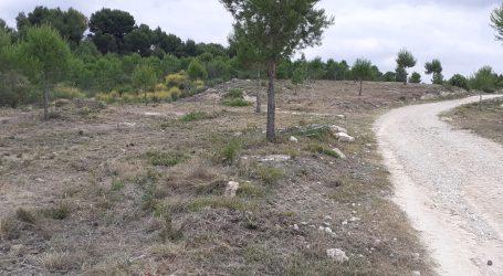 Paterna ejecuta el mantenimiento de la franja de seguridad del circuito forestal A de La Vallesa