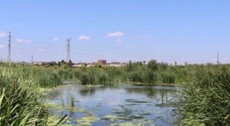 Un filtro verde en Silla mejorará la calidad del agua que llega a l'Albufera