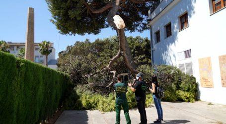 Benetússer talará el pino del jardín del Xalet de la Xapa