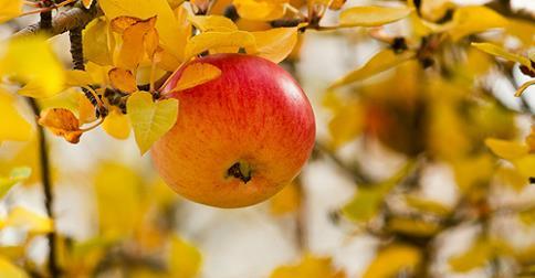 Ego, fruto del árbol del conocimiento del bien y del mal
