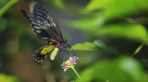 أكبر الحشرات في العالم