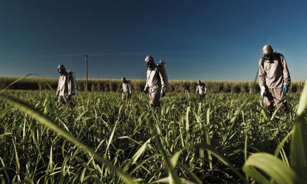 أكثر الدول إنتاجا لقصب السكر