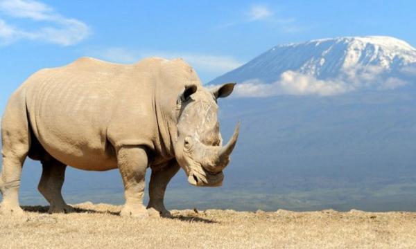 أهم الحيوانات البرية في أفريقيا