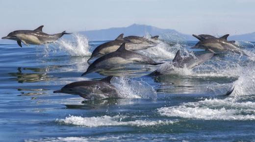 أهم الفروق بين الحوت والدولفين
