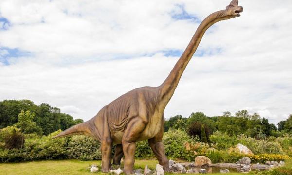 أهم المعلومات عن الديناصور ديبلودوكس