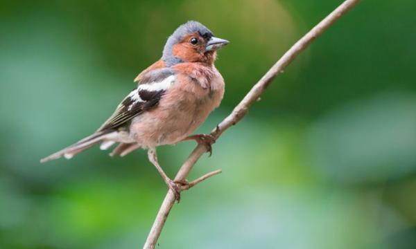 أهم المعلومات عن طائر الجواثم