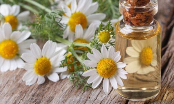 ما هى فوائد البابونج للشعر، للصحة، وللبشرة؟