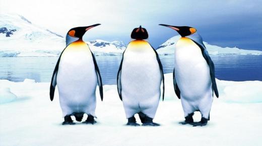 تفسير حلم رؤية البطريق في المنام