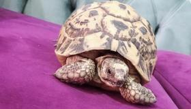 السلاحف.. كل ما تريد معرفته عن أنواع وأين تعيش السلاحف وطرق تربيتها