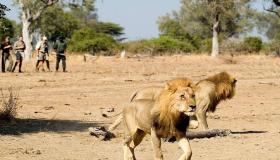 السياحة فى زامبيا
