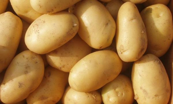 طرق تخزين البطاطس لفترة طويلة فى الفريرز وبأكثر من طريقة