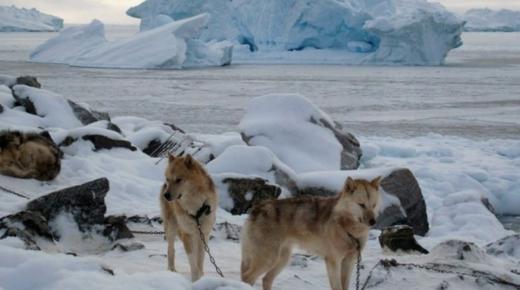 ماذا تعرف عن جزيرة جرينلاند ؟