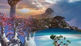 ماذا تعرف عن جزيرة سقطري ؟