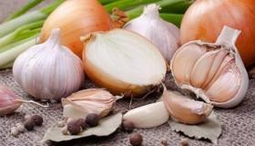 دراسة جدوى مشروع تجفيف البصل والثوم