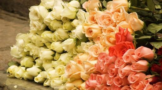 أحلى صور ورد جوري 2020 HD أجمل رمزيات وخلفيات وبطاقات ورود وأزهار رومانسية