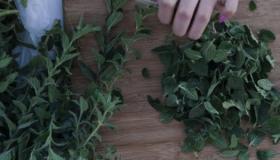 طريقة حفظ الزعتر الأخضر بالفريزر