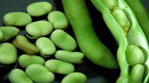 طريقة حفظ الفول الأخضر