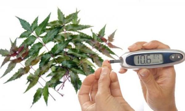وصفة لعلاج مرض السكري بالأعشاب