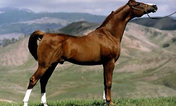 قصة الحصان الأعمى للأطفال