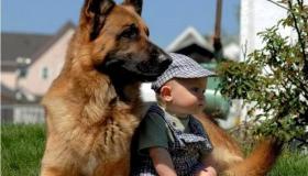 قصة رائعة الأمير والكلب الوفي