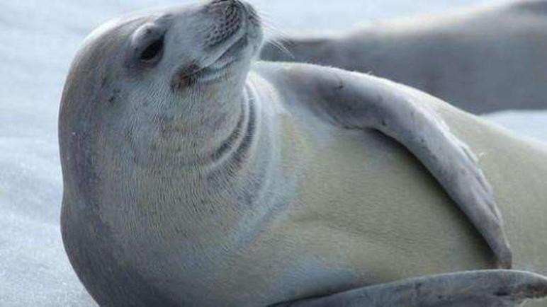 تفسير حلم رؤية كلب البحر في المنام