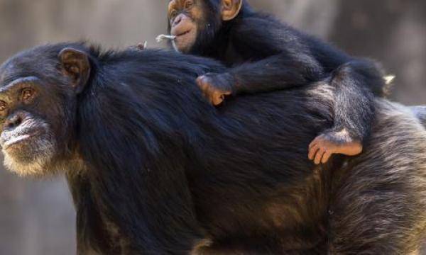ما هي أذكى الحيوانات؟