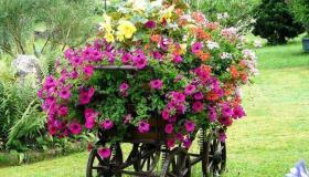 مشروع عربة بيع الورد