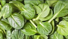 طرق مختلفة لطبخ نبات السلق