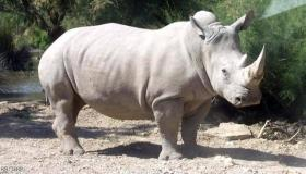 تفسير حلم رؤية وحيد القرن في المنام
