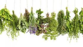 علاج انخفاض هرمون الإستروجين بالأعشاب