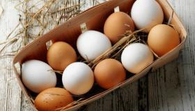دراسة جدوى مشروع توزيع البيض في مصر