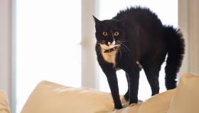 أسباب فوبيا القطط وكيفية علاجها