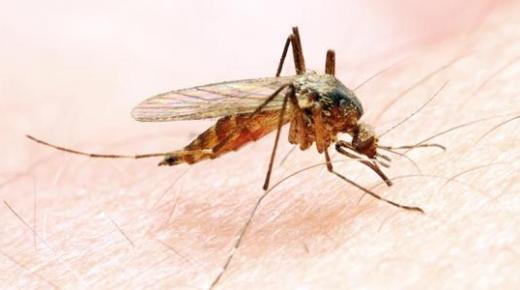 كيفية انتقال الملاريا