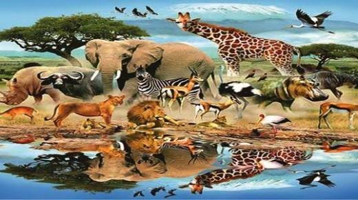 طرق تكاثر الحيوانات