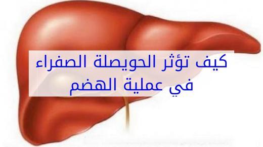 تأثير الحويصلة الصفراء على عملية الهضم بجسم الإنسان