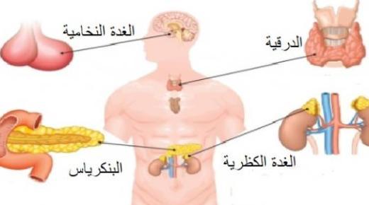 ما هي الغدد الصماء ؟