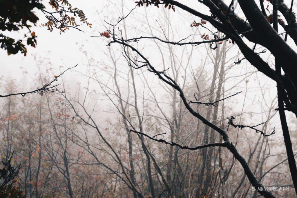 Feldberg rama 2. Selva negra en tres dias