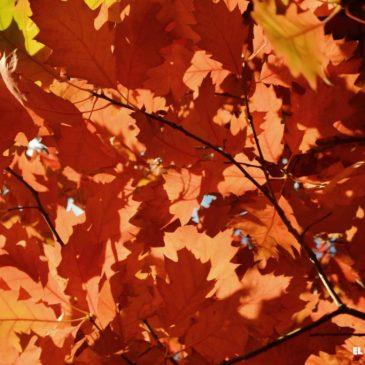 Por qué Bariloche en otoño es una excelente opción