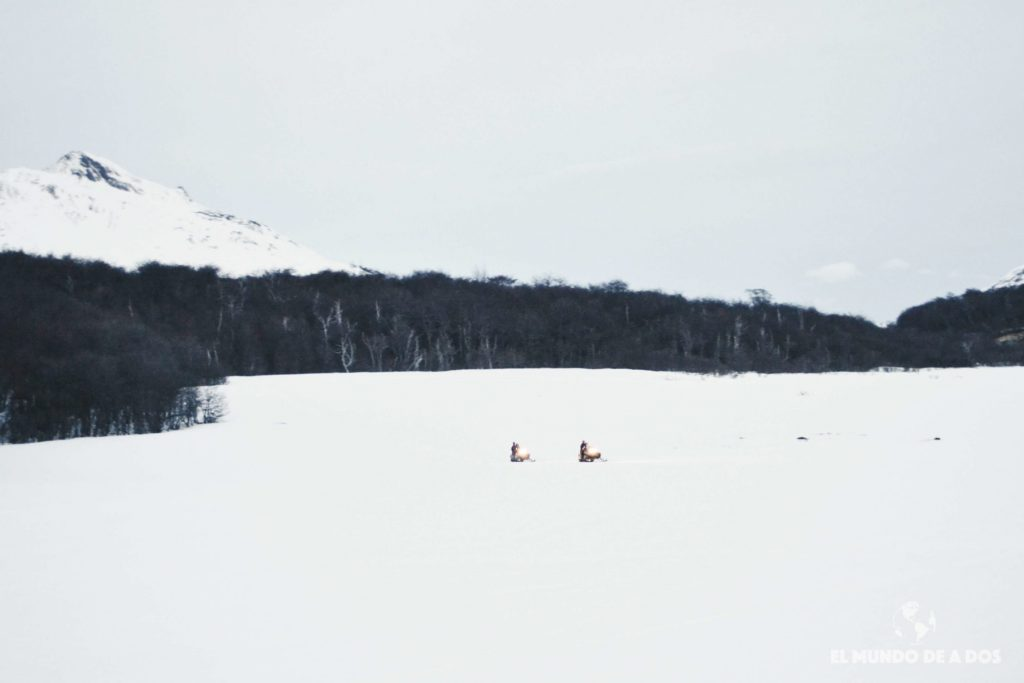 Trayecto con motos de nieve. Nieve y Fuego Ushuaia
